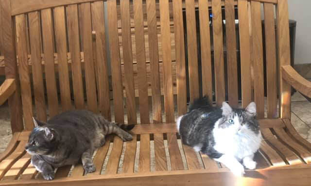 Two cats sitting on a bench