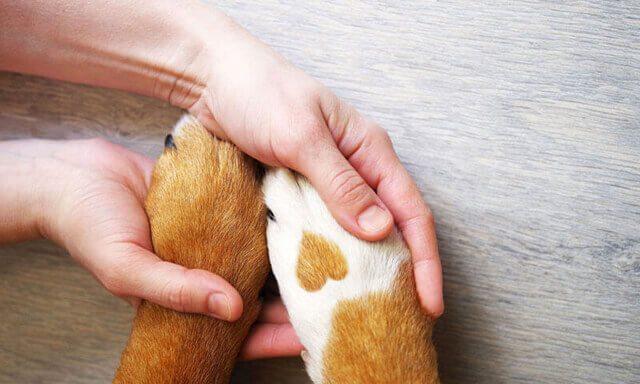Human hands holding puppy paw with heart shaped detail